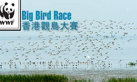 Big Bird Race 2012