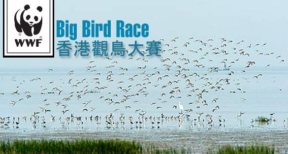 香港觀鳥大賽2012