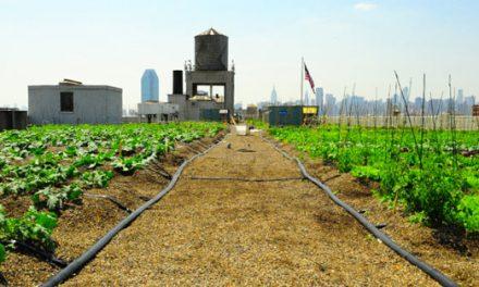 Urban Rooftop Farms: Brooklyn Grange