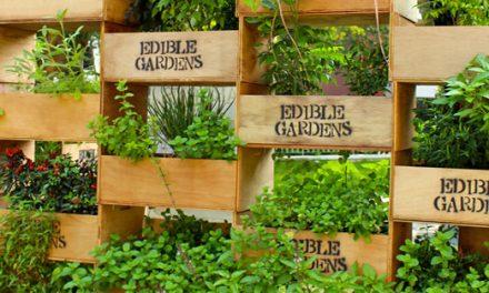新加坡食用花園項目