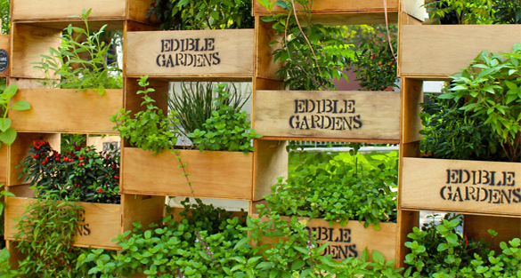 The edible garden project go asia for Edle gardinen