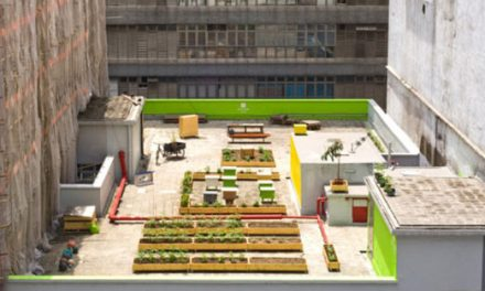 Urban Rooftop Farms: HK Farm