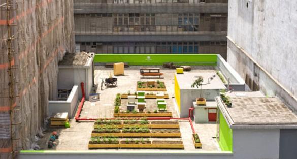有趣城市天台農場: HK Farm