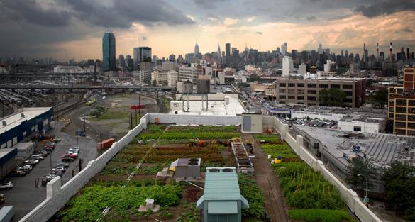 全球五個最有趣的城市天台農場