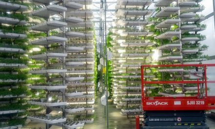 Rooftop farms – the future of agriculture?
