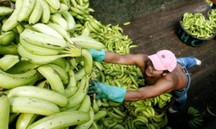 Turns Bananas into Plastic?