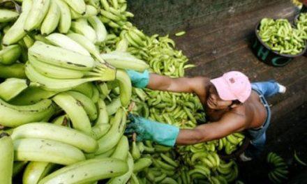 以香蕉皮製造塑膠?