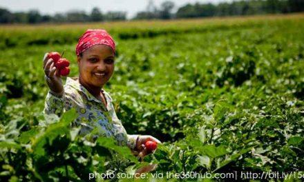 案例研究:非洲靠自己擺脫糧食問題