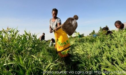 Case Study: Africa: Feeding the rising urban population