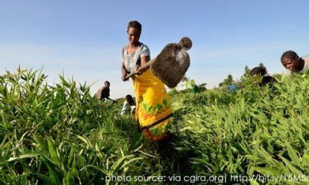 Case Study: Africa: Feeding the rising urban population