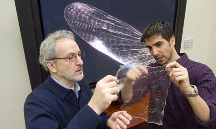 New plastic made from shrimp or insect's shell