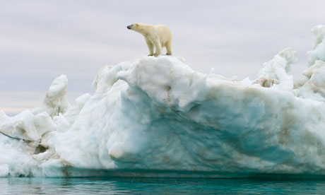 Human, the Cause for the Loss of Arctic Sea Ice