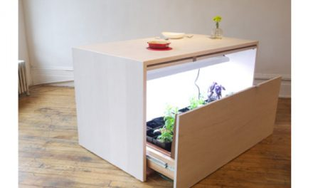 Secret Hydroponic Garden for Your Kitchen