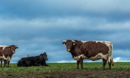 Want to Save Earth? Cut Out Meat