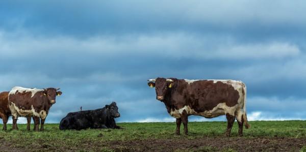 保護地球 減少吃肉