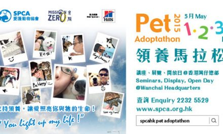Hong Kong – Pet AdoptathonI May 1-3