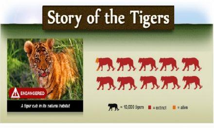 International Tiger Day 2015 – Jul 29