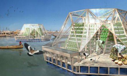 意大利:不佔耕地和不用灌溉的「漂浮溫室」  打造人類的未來糧倉