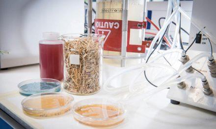 廚餘加酵母 成棕櫚油替代新發明