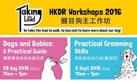 HK – Hong Kong Dog Rescue Workshop  I Aug – Nov 2016