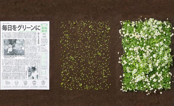 「可持續/讀發展」的綠活報章