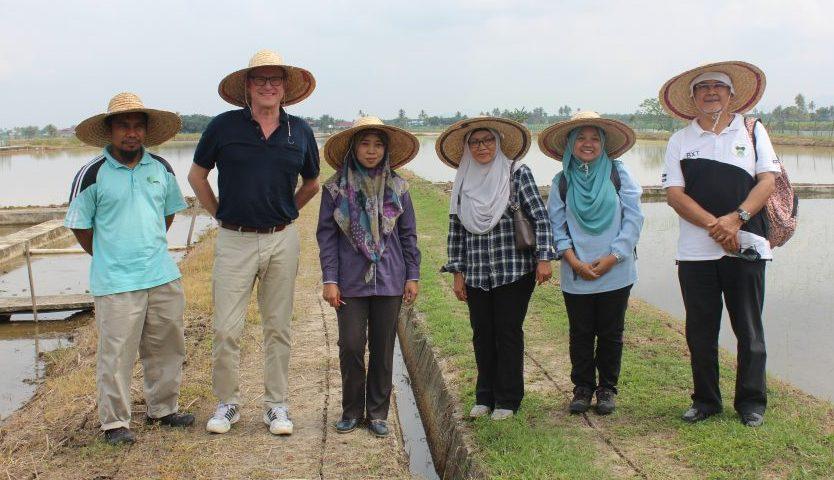 防‧蟲‧稻 –  馬來西亞學者成功研發有機全效防蟲藥
