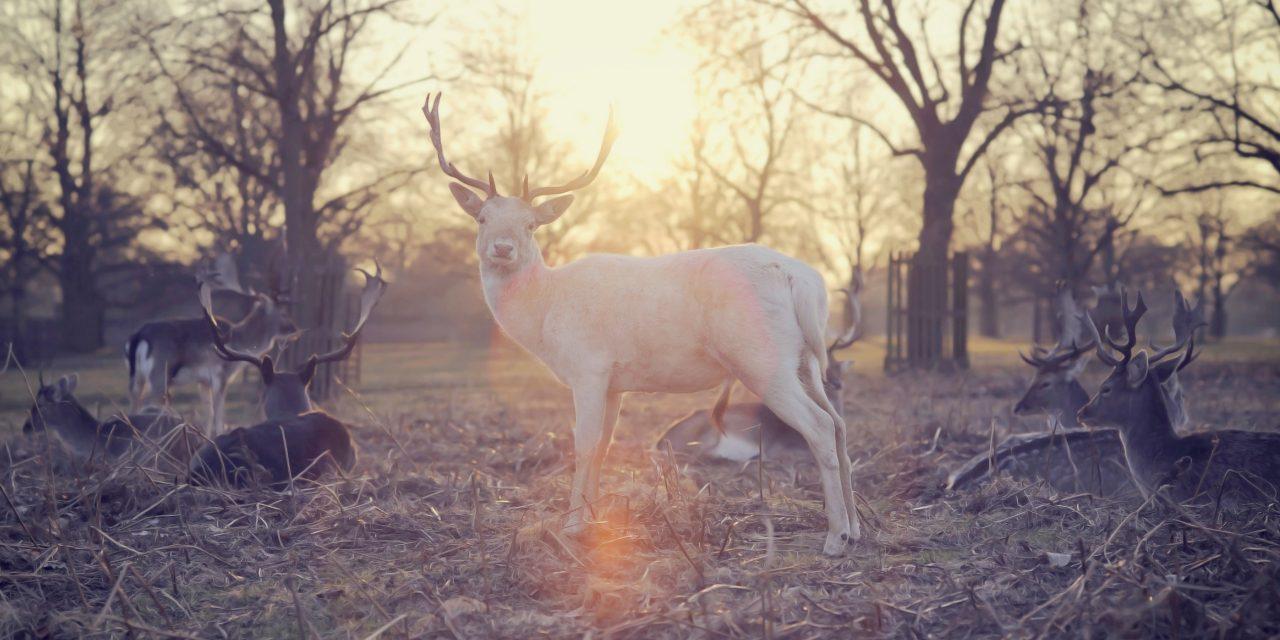 Instagram 試行新政策杜絕網上非法捕獵行為